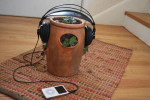 """""""Exponer a una planta a más de 3 horas de música, podría poner en peligro su salud"""""""